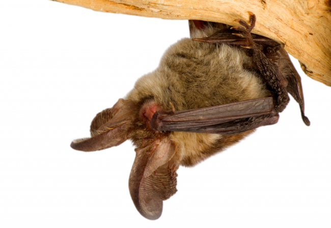 bat_facepalm_crop-1024x707-1024x707.png