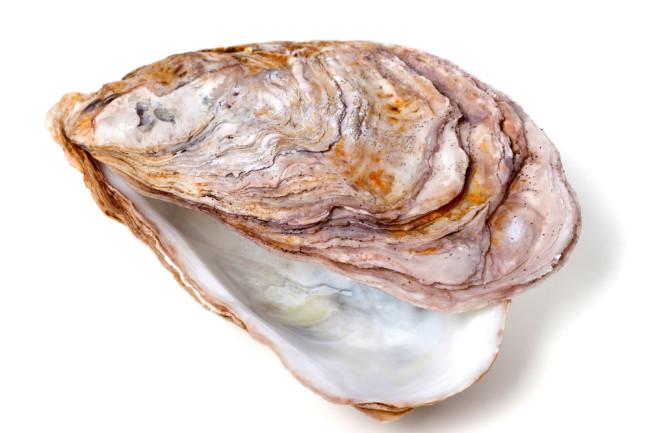 Oyster Shell - Shutterstock