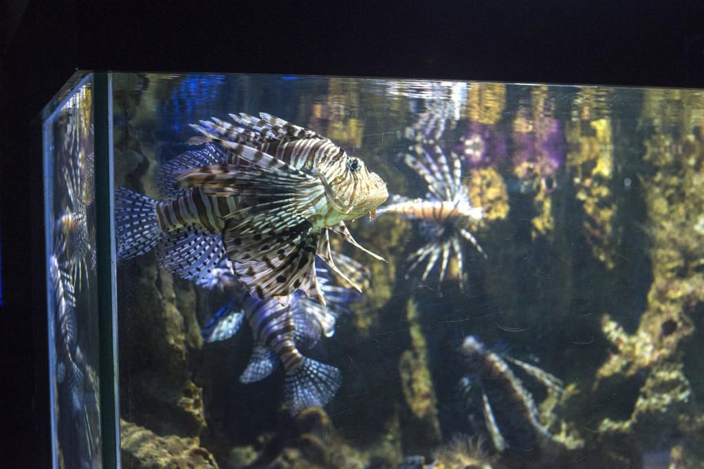 lionfish_aquarium-1024x683.jpg