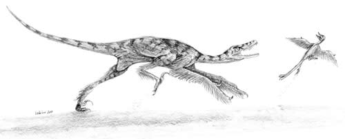 Sinornithosaurusvsbird.jpg