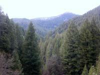 Conifer_forest.jpg