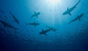 shark.jpg