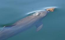 dolphin-sponge.jpg