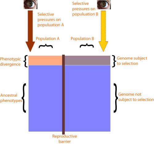 variationschematic.jpg