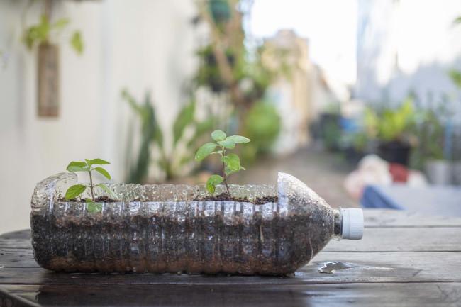 Plants in Bottle - Shutterstock