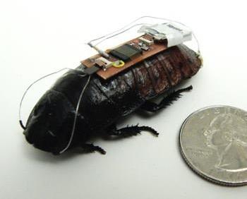 Roachbot2.jpg