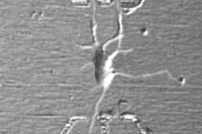 nanoelectrode200.jpg