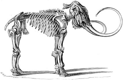Mammothskeleton.jpg