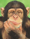 Chimp_thinking-thumb-102x130-42668.jpg