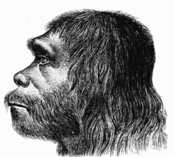 250px-Neanderthaler_Fund.png