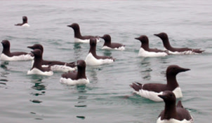 6-seabird.jpg