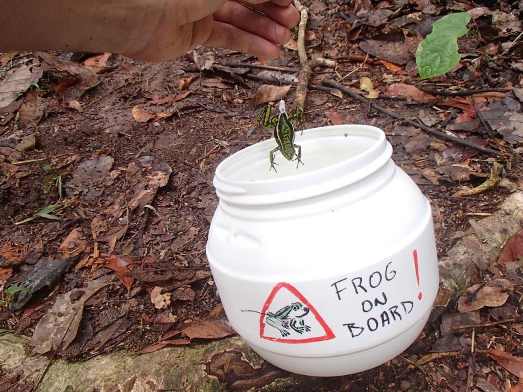 frog-bucket-1024x768.jpg