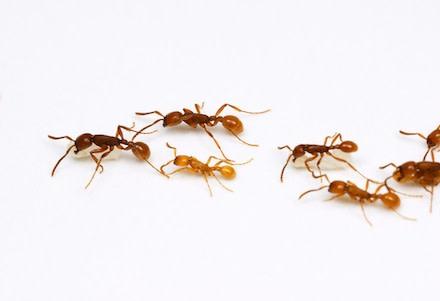 marching-ants.jpg