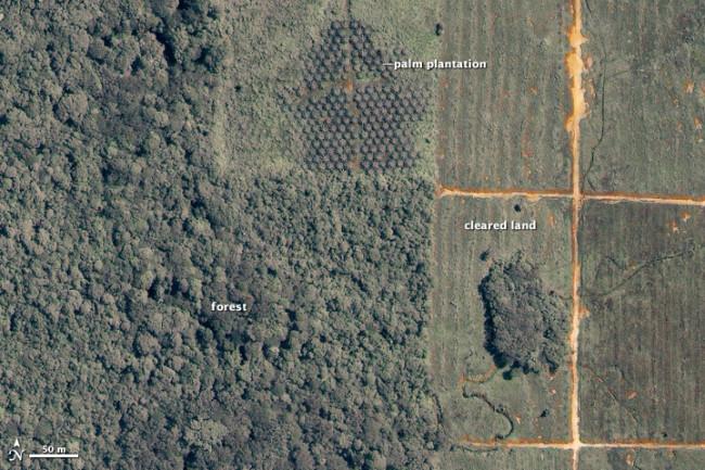 deforestation-borneo