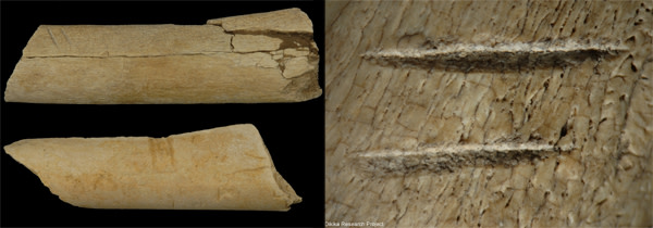 Bone_scars.jpg