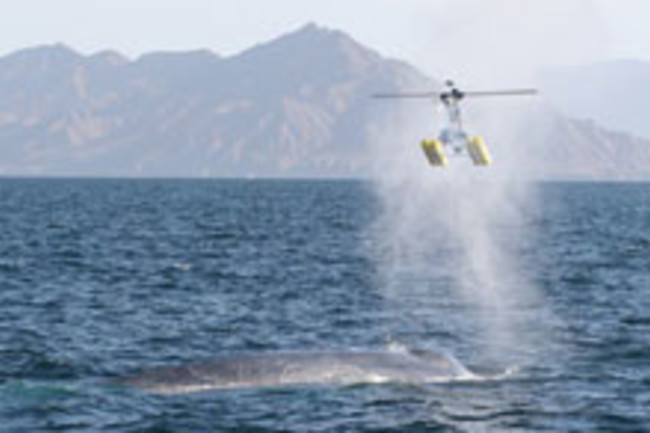 whale blowhole helicopter
