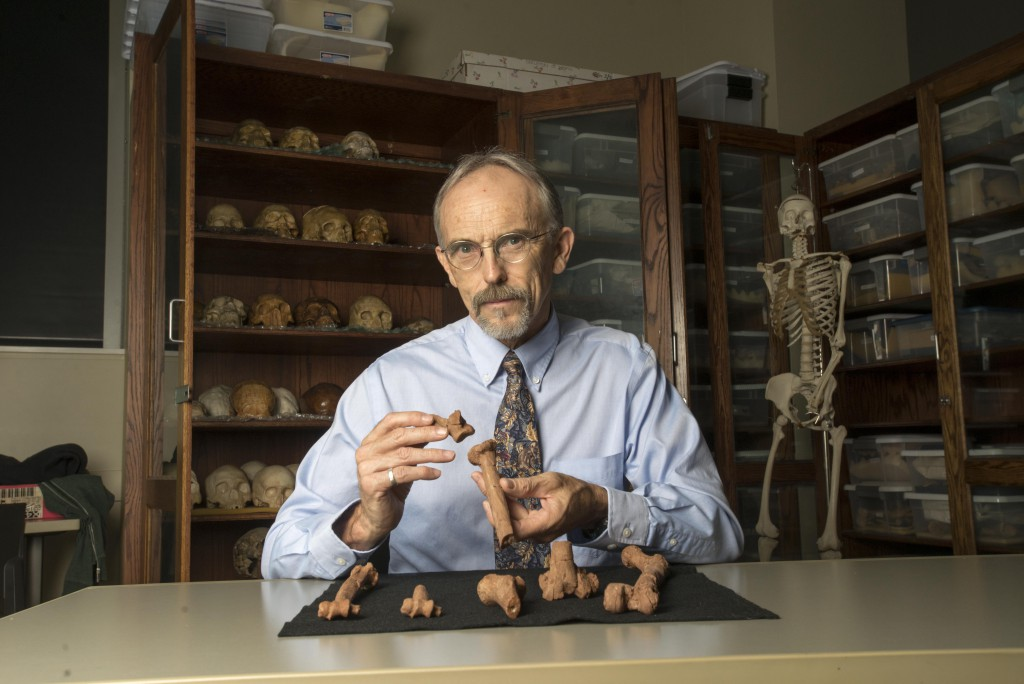 UT Austin professor John Kappelman with 3D printouts of Lucy's skeleton illustrating the compressive fractures in her right humerus that she suffered at the time of her death 3.18 million years ago. (Photo by Marsha Miller/UT Austin)