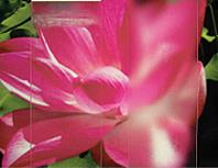 rd-flower.jpg