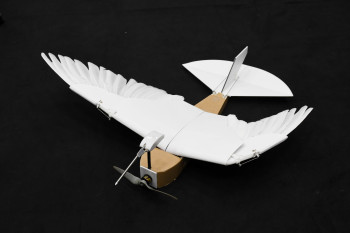 With Help from Pigeon Feathers, This Robot Takes to the Sky