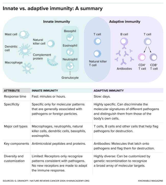 G-innate-vs-adaptive-alt