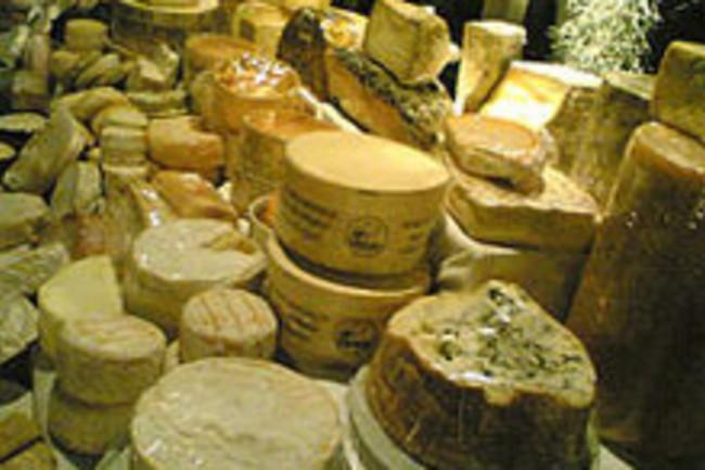cheeseweb.jpg