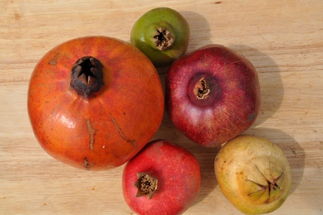 Five pomegranates of varying sizes and shapes sit on a table.