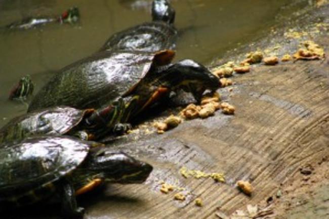 turtles-300x225.jpg
