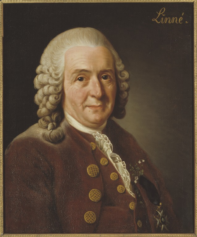 04 Carl von Linné 1707-1778 botanist professor Alexander Roslin - Nationalmuseum - 15723