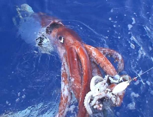 Giant_squid_attack.jpg