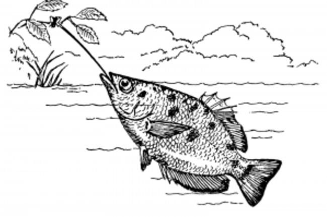 Archerfish_PSF-300x213.png