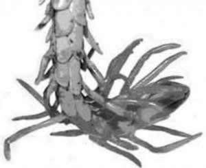 Spider-tailed Viper - Bostanchi et al.