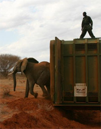 Elephantcrate.jpg