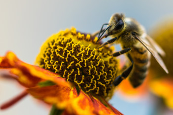 Like Humans, Bumblebees Can Recognize Objects Through Touch