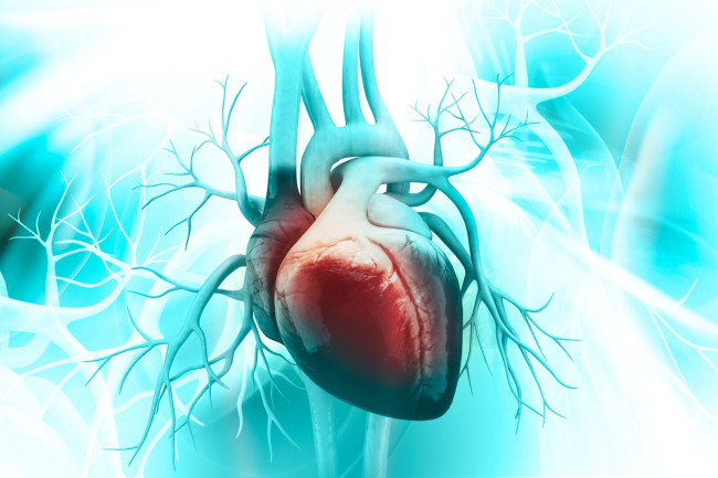 heart disease medical shutterstock
