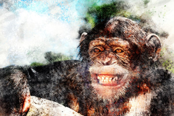 Cheerful Chimps: Are Animals Really Happy When They Smile?
