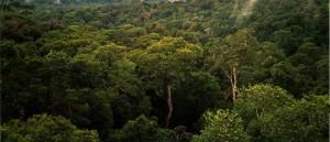 800px-Amazon_Manaus_forest-300x129.jpg
