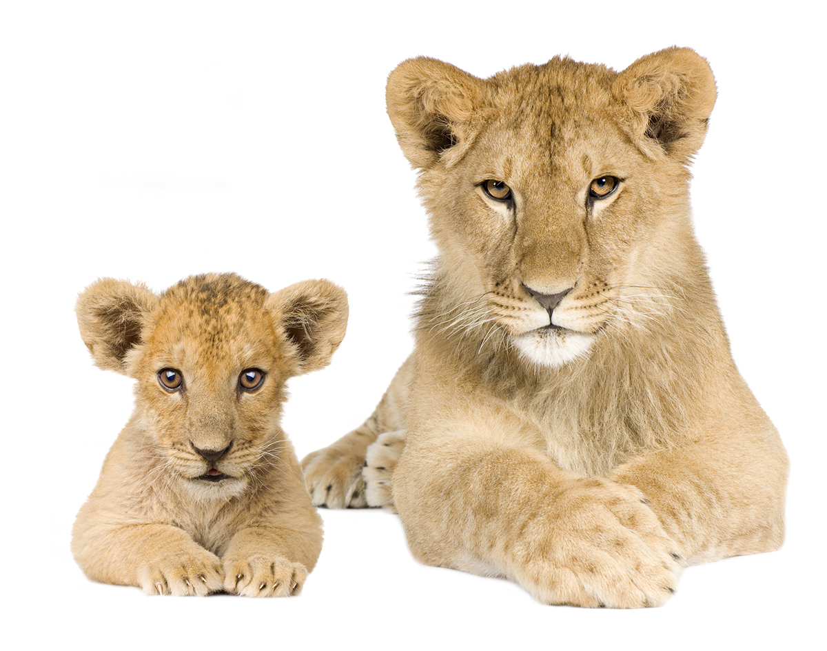Mom and Baby Lion - Shutterstock