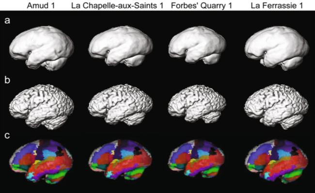Neanderthal Brains - Scientific Reports doi:10.1038/s41598-018-24331-0