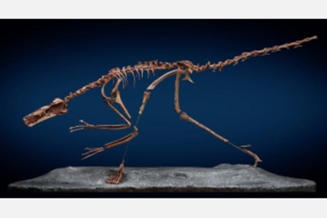 buitreraptor2_f.jpg
