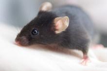 mouse220.jpg