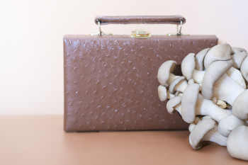 Soon, You Could Be Wearing Mushroom Leather. But Will It Be Better for the Environment?