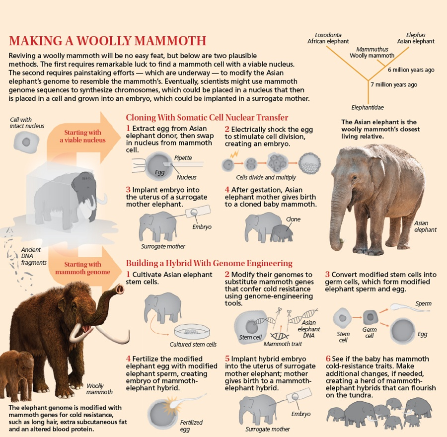 Making a Woolly Mammoth