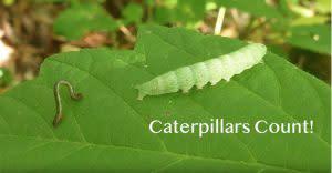 CaterpillarsCount-300x156