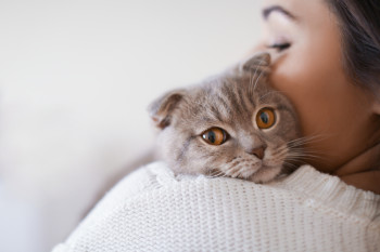 Hypoallergenic Cats: Scientists Are Developing Treatments to Make Cats Allergy-Free