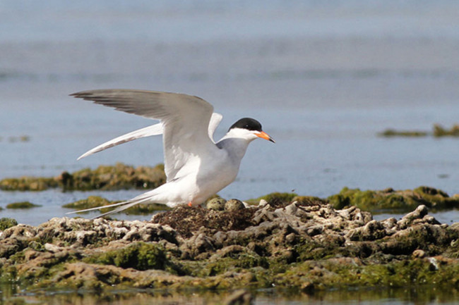 seabird-survey.jpg