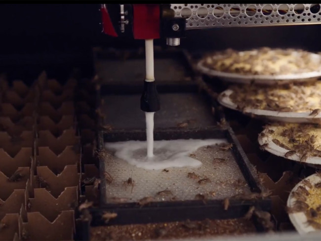 Cricket Production - Aspire Food Group