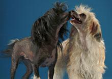 hairless-dog.jpg
