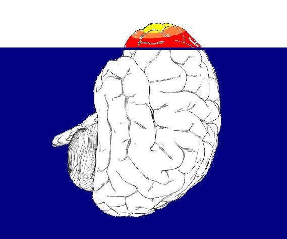 tip-of-brain.jpg