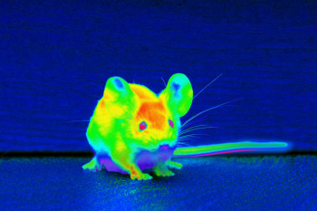 Scientists Injected Nanoparticles Into Mice's Eyes to Give Them Infrared Vision