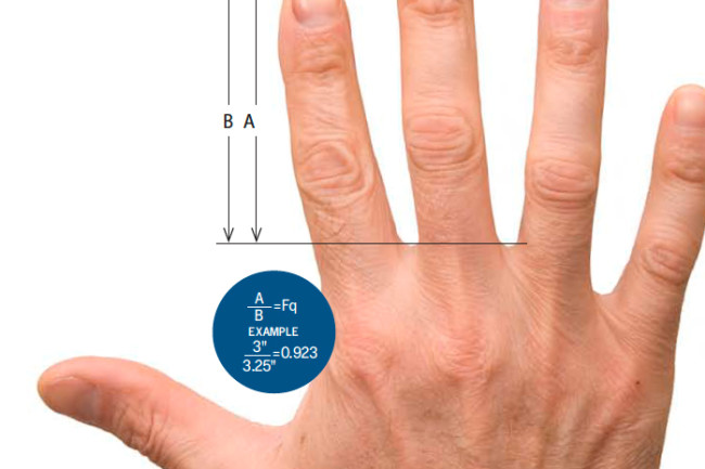 Finger Length Predicts Health and Behavior